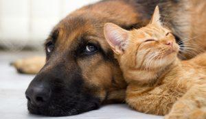 pets diseases